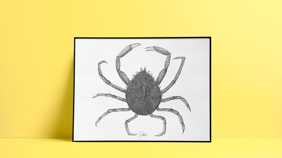 Sérigraphie Araignée de Mer / Noir