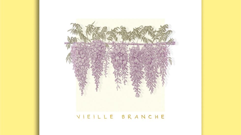Carte Postale - Vieille Branche