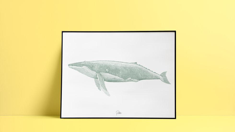 Sérigraphie Baleine/ Vert de gris