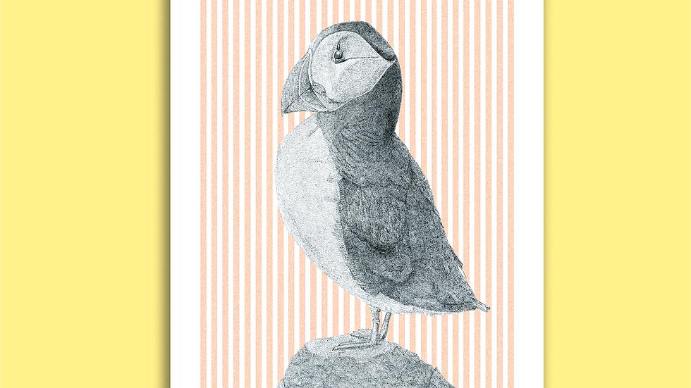 Carte Postale Macareux