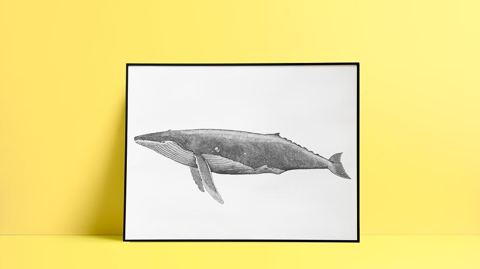 Sérigraphie Baleine / Noir
