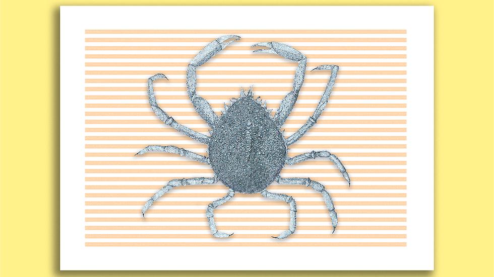 Carte Postale Araignée de mer