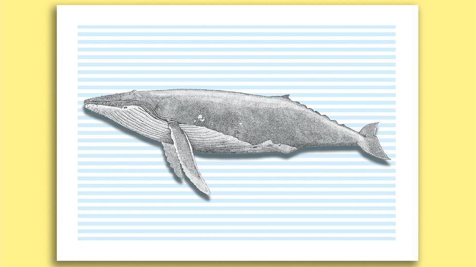 Carte Postale Grosse Baleine