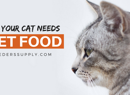 Why Your Cat Needs Wet Food
