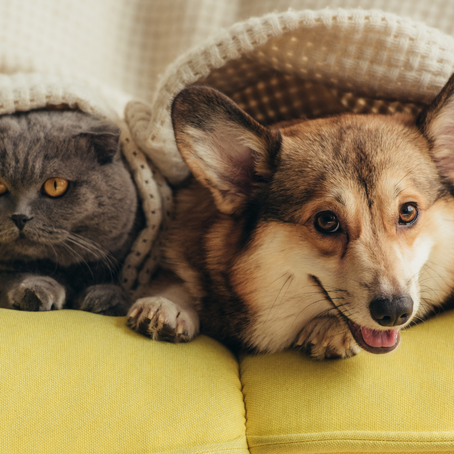 National Animal Pain Awareness Month - Take a Look at Pet Pain Causes and Remedies