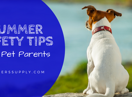 Summer Safety Tips for Pet Parents