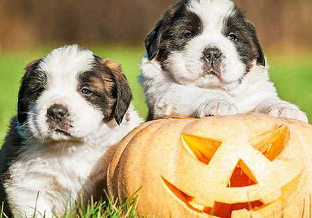 Halloween Items Your Dog Should Avoid