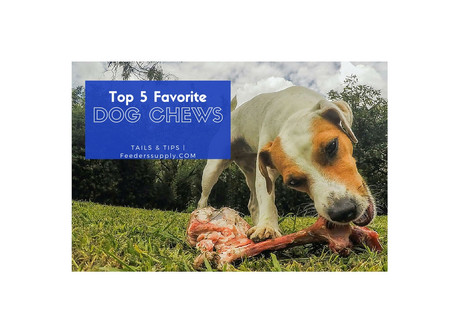 Top 5 Favorite Dog Chews