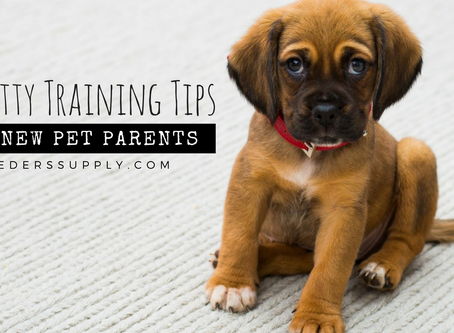 8 Potty Training Tips for New Pet Parents