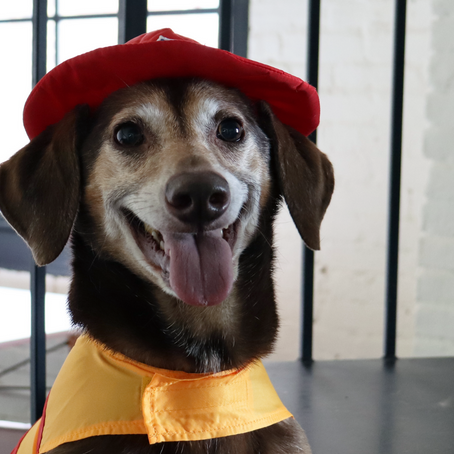 Your Pet's Halloween Costume Based on Their Sign