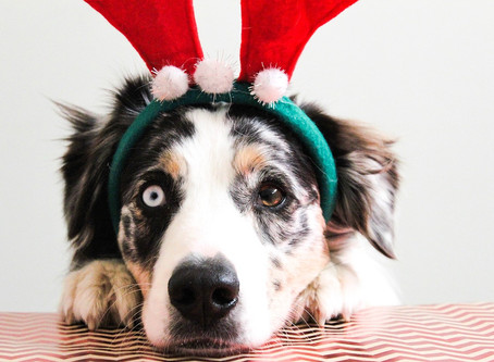 10 Pawliday Safety Tips