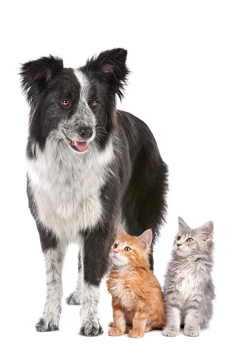 Adoptable Dogs Adoptable Cats