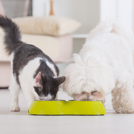 5 Reasons to Add Raw Food to Your Pet's Diet