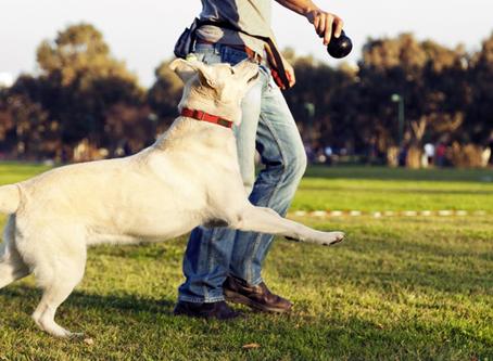 Hyaluronic Acid for Canine Arthritis