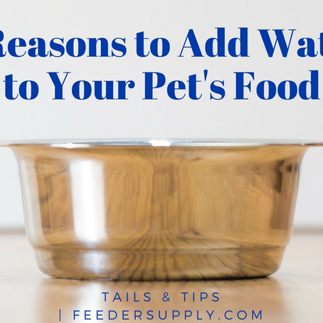 5 Reasons to Add Water to Your Pet's Food