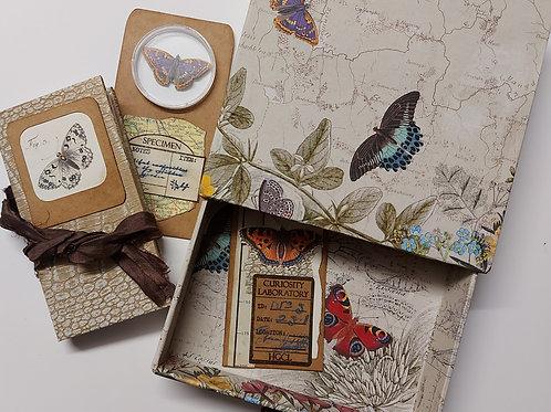 The Garden Traveller's Museum Drawer - Butterflies