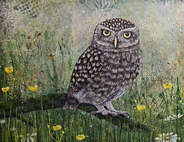 owl%20cropped_edited.jpg