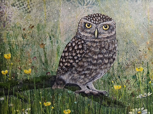 Little Owl original painting