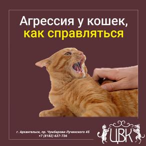 Агрессия у кошек — как справляться