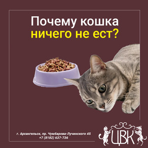 Почему кошка ничего не ест? Опасный симптом