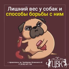 Лишний вес у собак и способы борьбы с ним