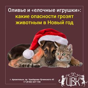 Оливье и «елочные игрушки»: какие опасности грозят животным в Новый год