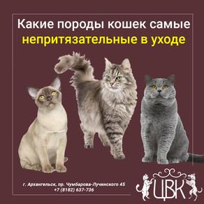 Какие породы кошек самые непритязательные в уходе
