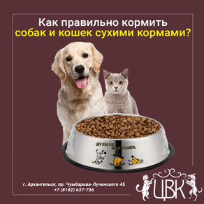 Как правильно кормить собак и кошек сухими кормами