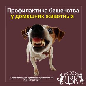 Профилактика бешенства у домашних животных — что нужно знать