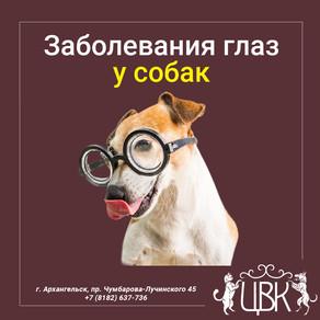 Заболевания глаз у собак: какие бывают, их причины и лечение