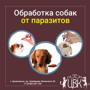 Обработка собак от паразитов – чем проводить и как часто