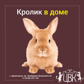 Кролик в доме — о чем следует знать хозяевам