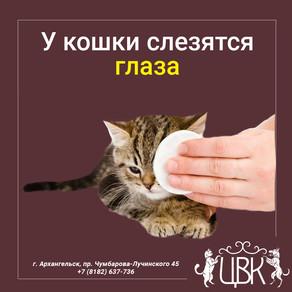 У кошки слезятся глаза: причины, что делать
