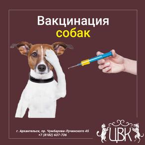 Вакцинация собак – профилактика лучше лечения