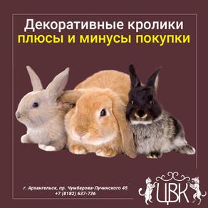 Декоративные кролики - плюсы и минусы покупки