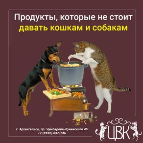 Продукты, которые не стоит давать кошкам и собакам