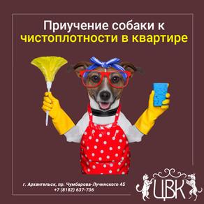 Приучение собаки к чистоплотности в квартире