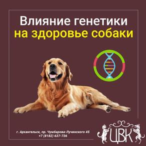 Генетика собаки при выборе — важна ли и на что влияет