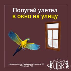 Попугай улетел в окно на улицу - что делать