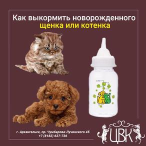 Как выкормить новорожденного щенка или котенка