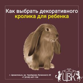 Как выбрать декоративного кролика для ребенка