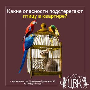 Какие опасности подстерегают птицу в квартире?