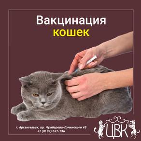 Вакцинация кошек от болезней