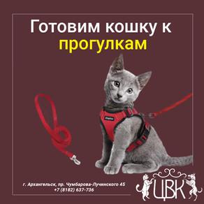 Готовим кошку к прогулкам: как сделать простую и удобную шлейку