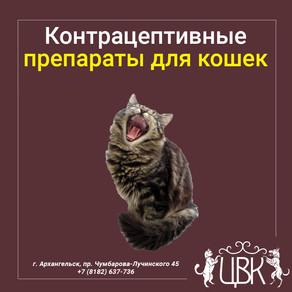 Контрацептивные препараты для кошек и особенности их воздействия на организм животного