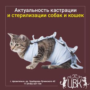 Актуальность кастрации и стерилизации собак и кошек