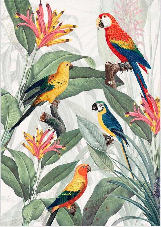 parrots .jpg