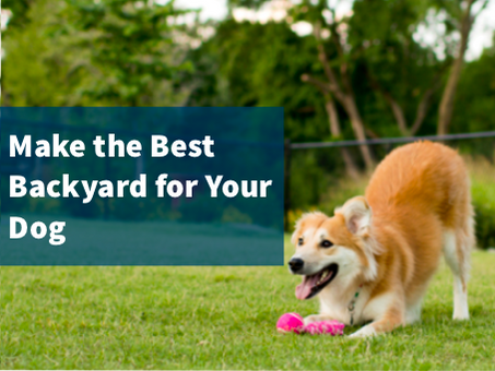 Five Ideas to Make Your Backyard Awesome for Your Dog