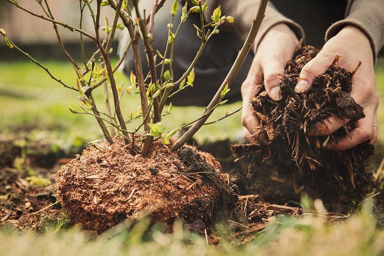 medium-fresh-hemlock-bark-mulch-sliver-less-tigard-or.jpg