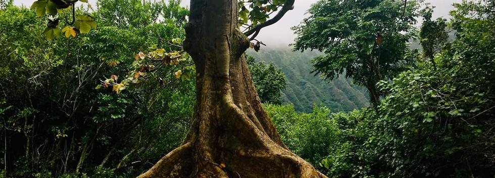 Medicine Tree